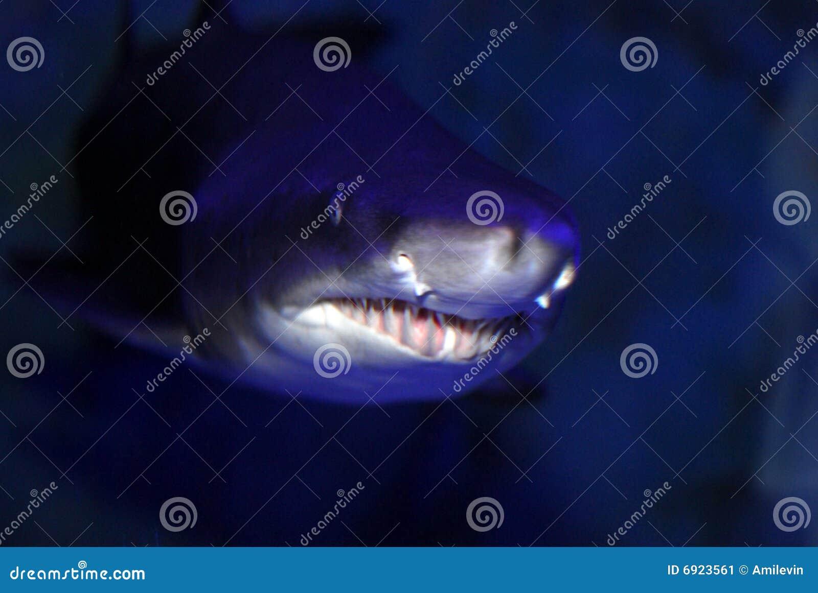 Alto vicino dello squalo