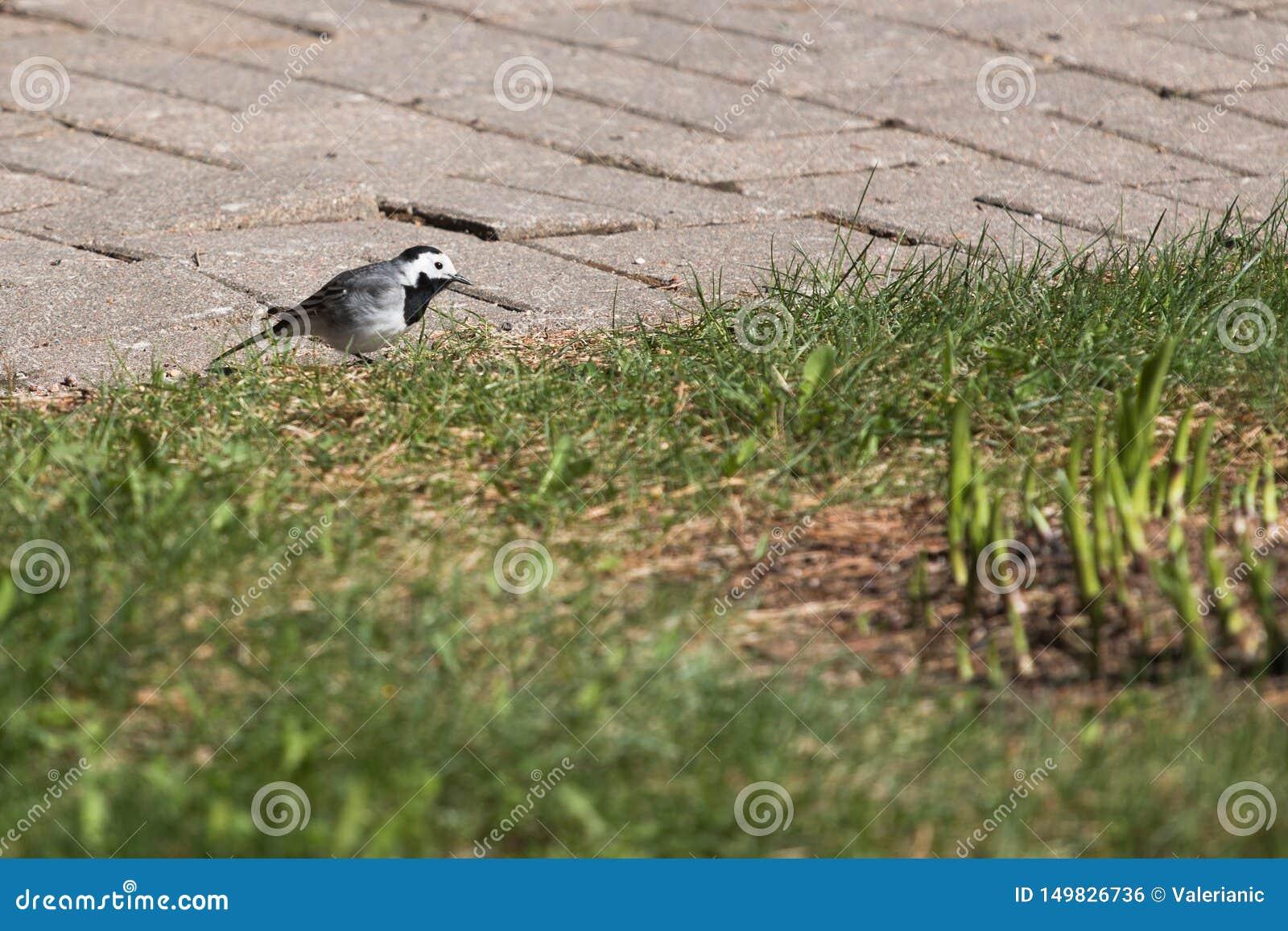 Alv?ola no gramado