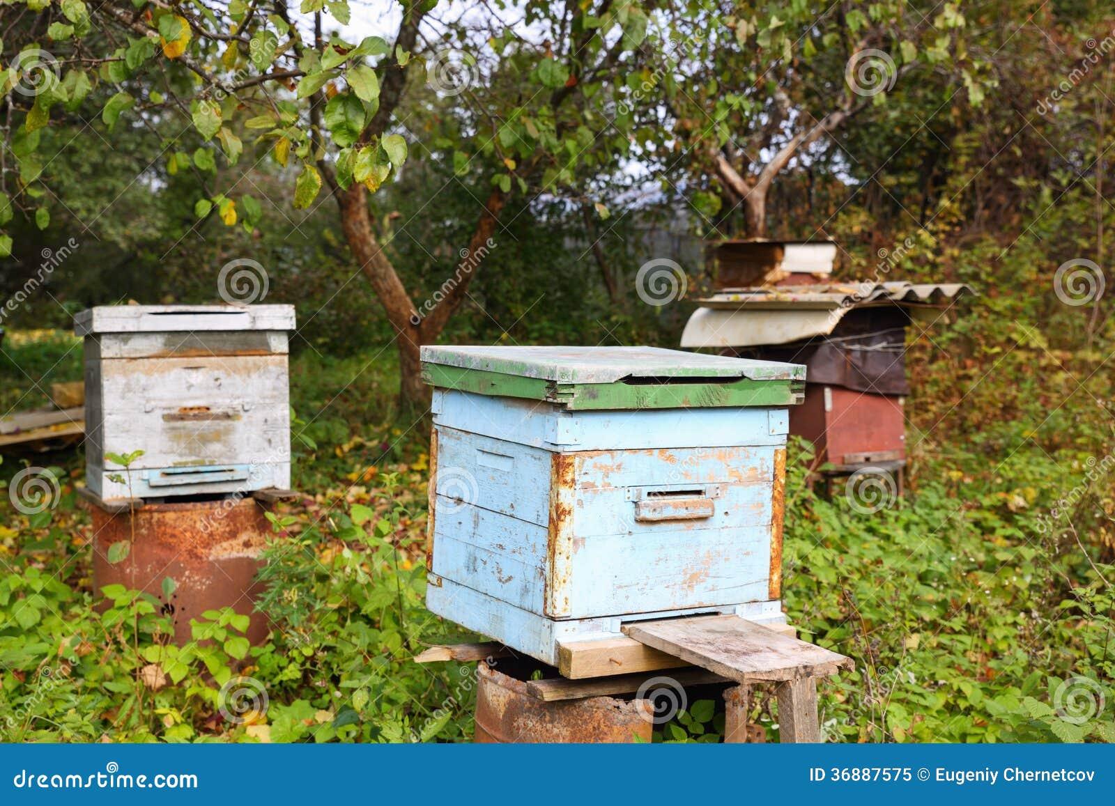 Download Alveare in giardino immagine stock. Immagine di agricoltura - 36887575