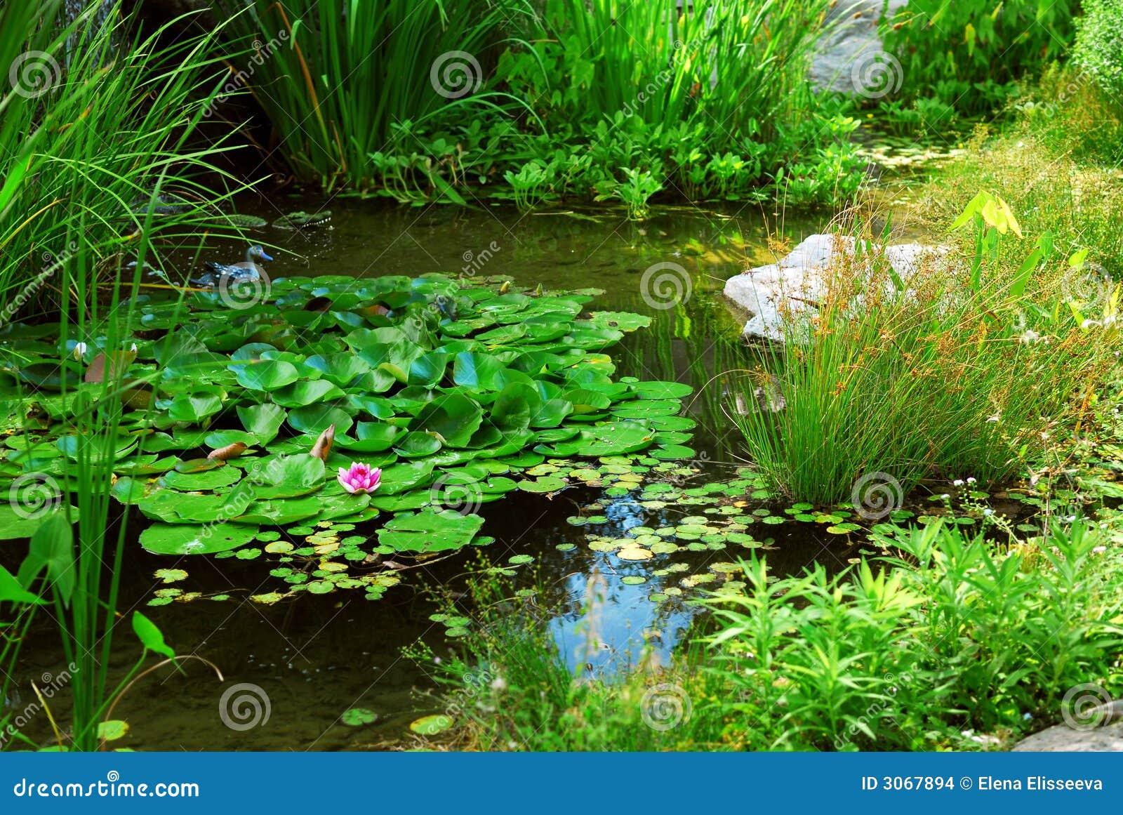 Aménagement d étang