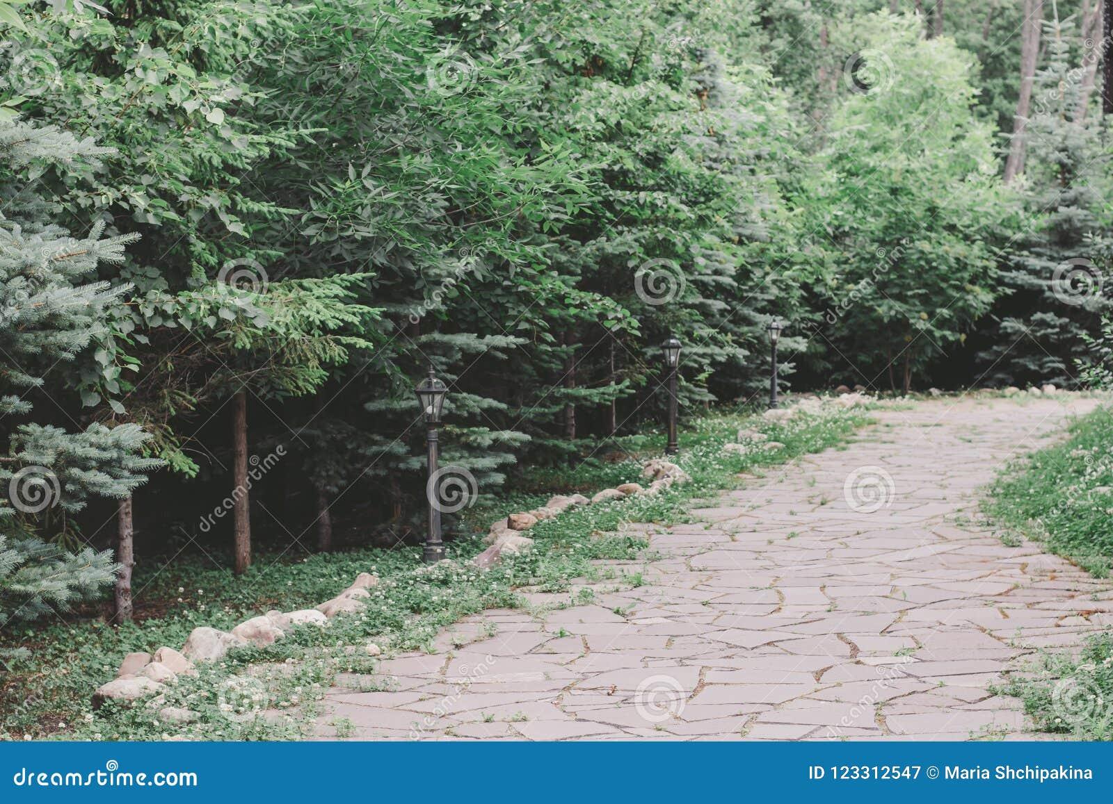 Aménagement dans le jardin Voie en pierre parmi des sapins et des buissons