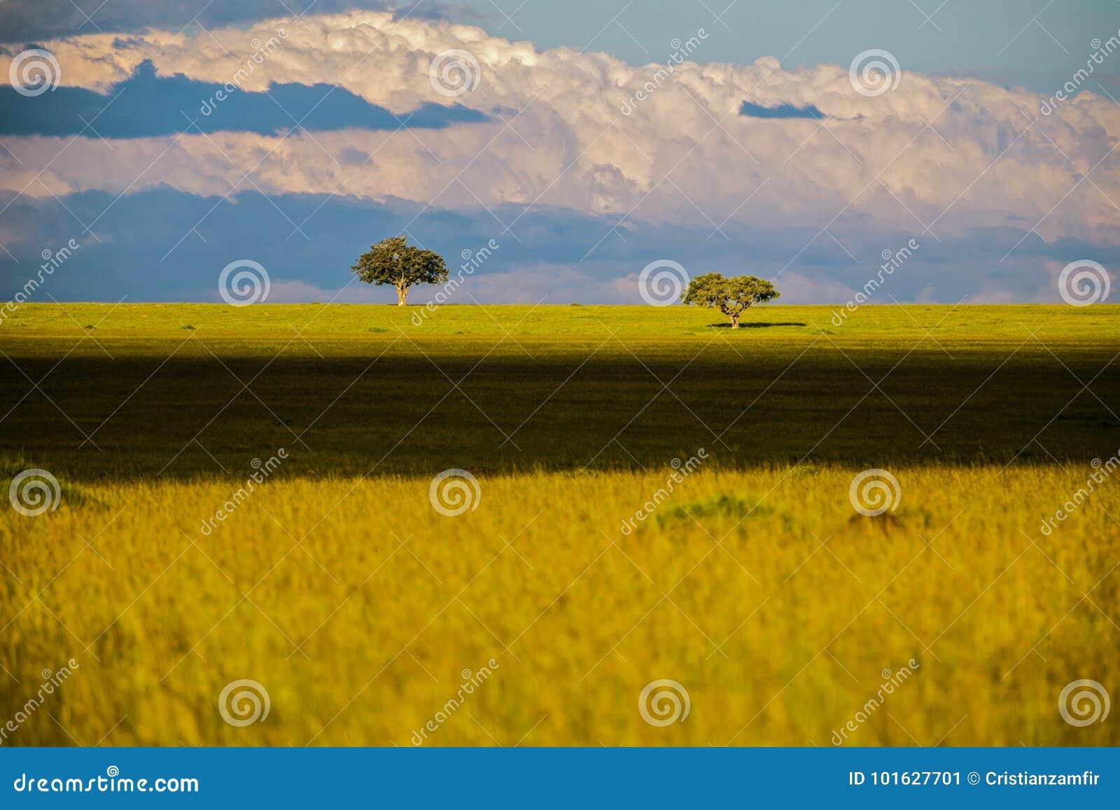Aménagez en parc avec des arbres de la savane en Afrique, safari
