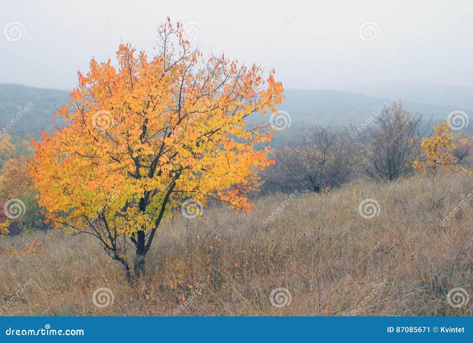 Aménagez l arbre en parc d automne avec le feuillage lumineux sur la colline de pente en brouillard en nature sauvage
