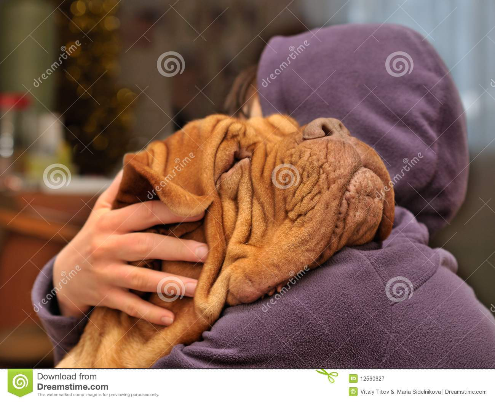 Amando um cão