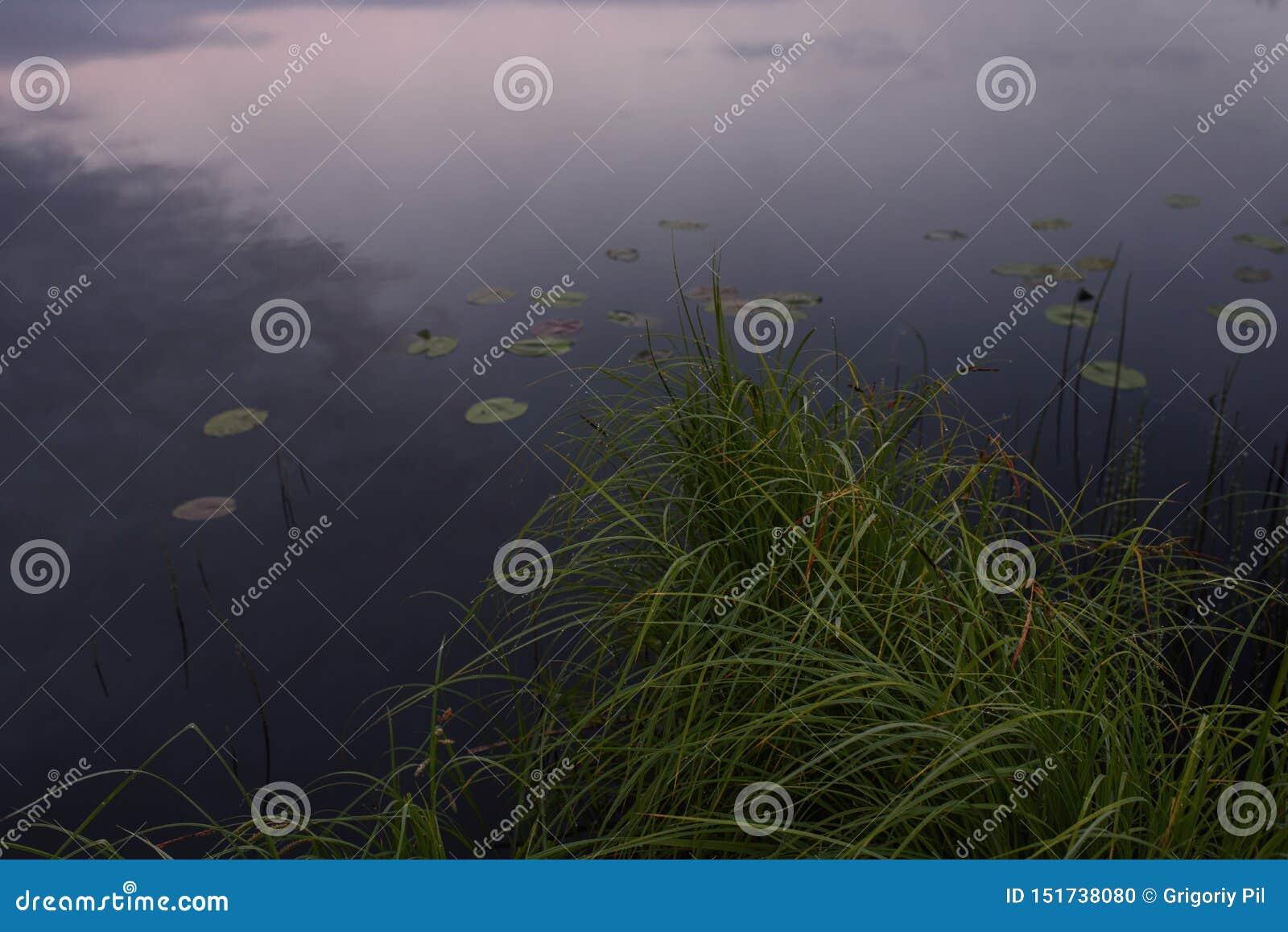 Amanecer en la orilla