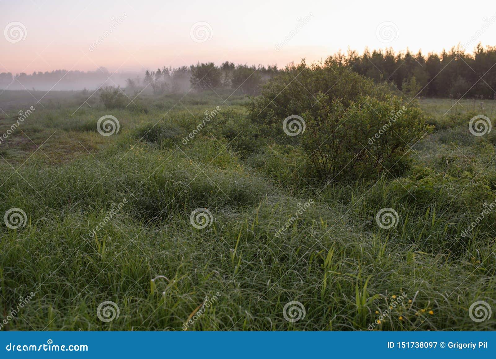Amanecer en un campo