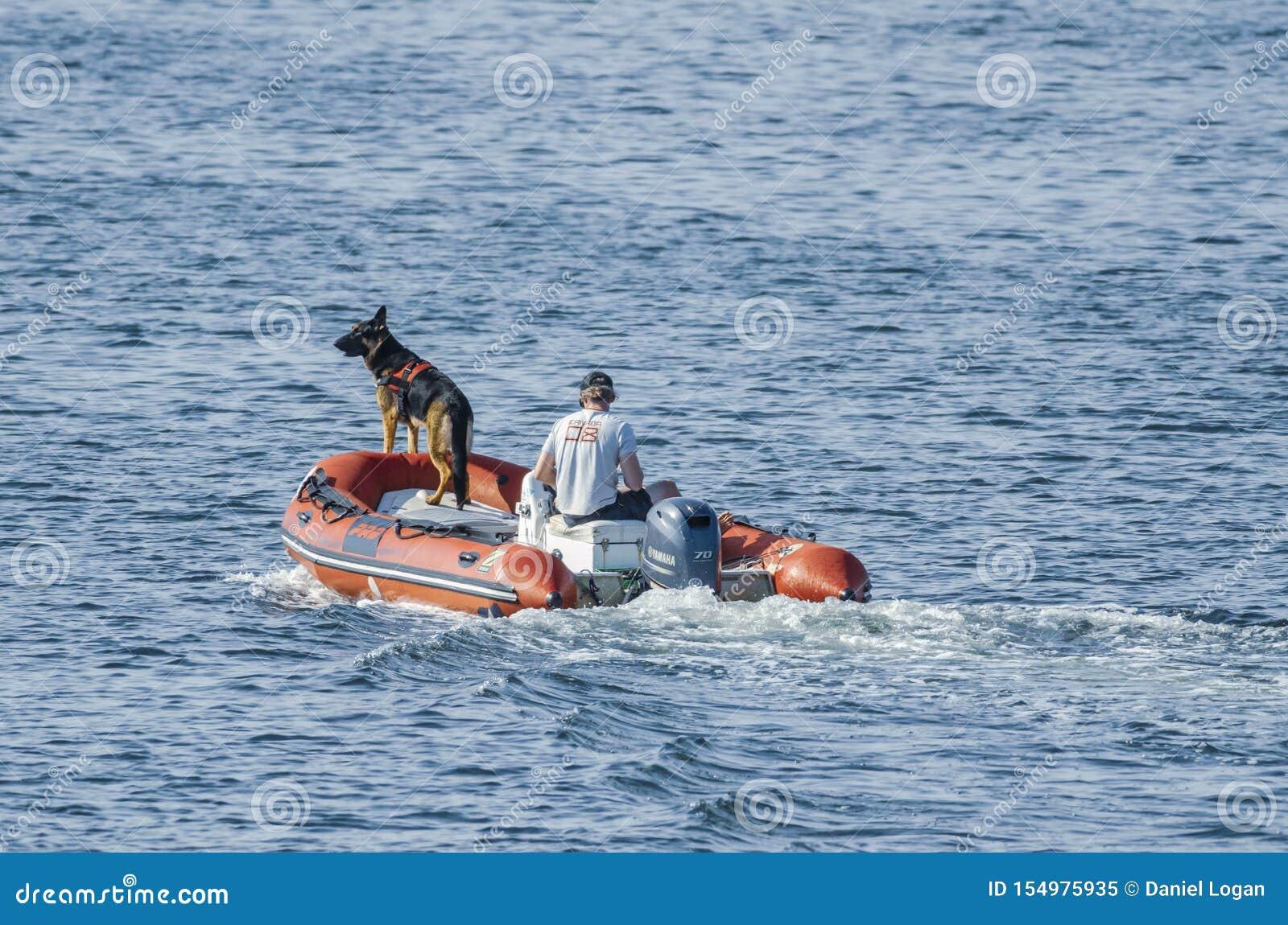 Amante do barco do pastor alemão