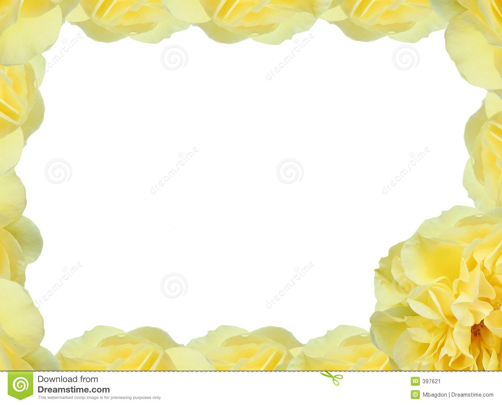 Amarillee a Rose