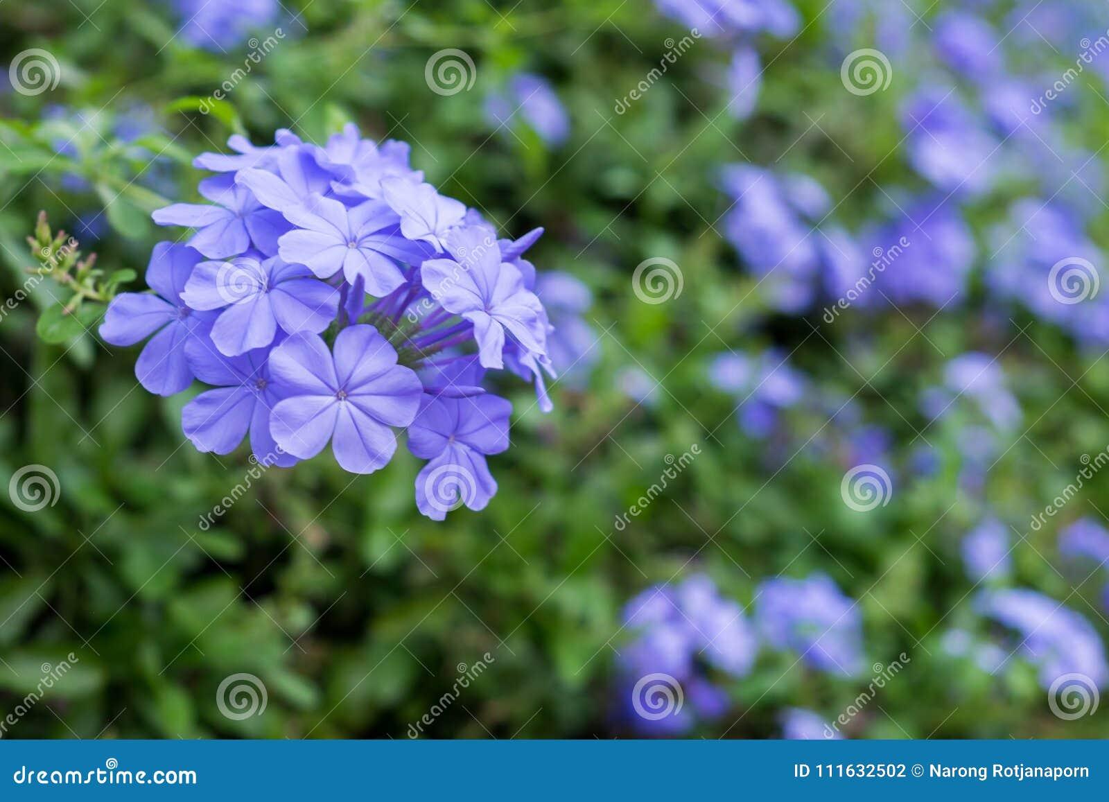 Amazing Beautiful Flowers Background Stock Photo Image Of Hello