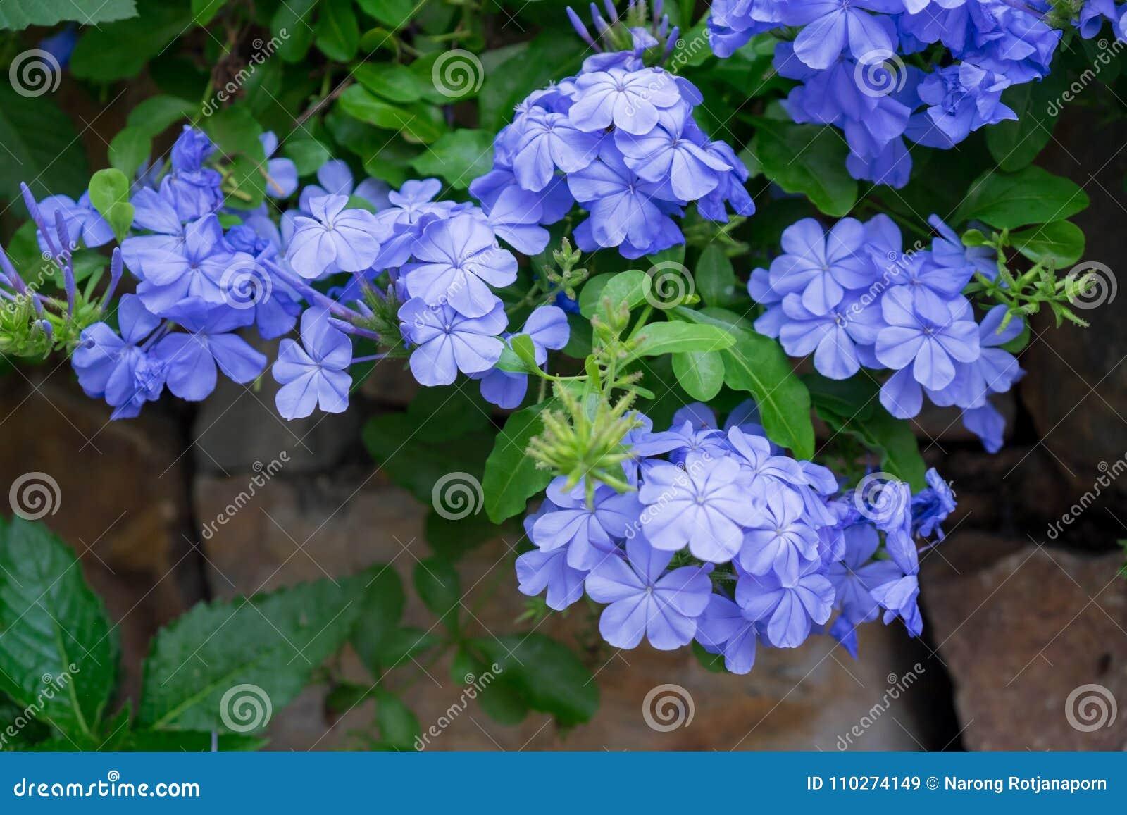 Amazing Beautiful Flowers Background Stock Image Image Of