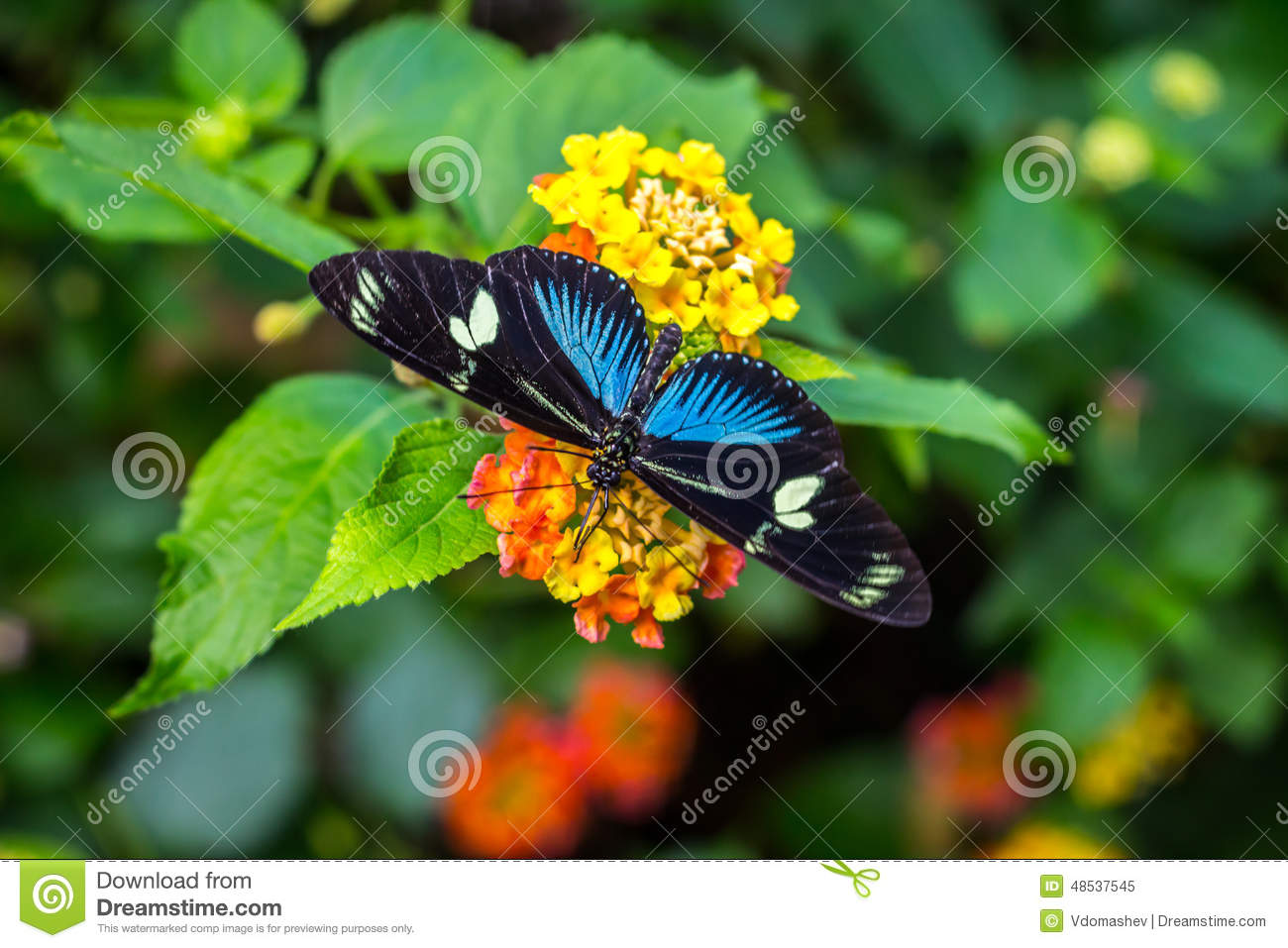 amazing butterfly on yellow flower stock photo image 48537546