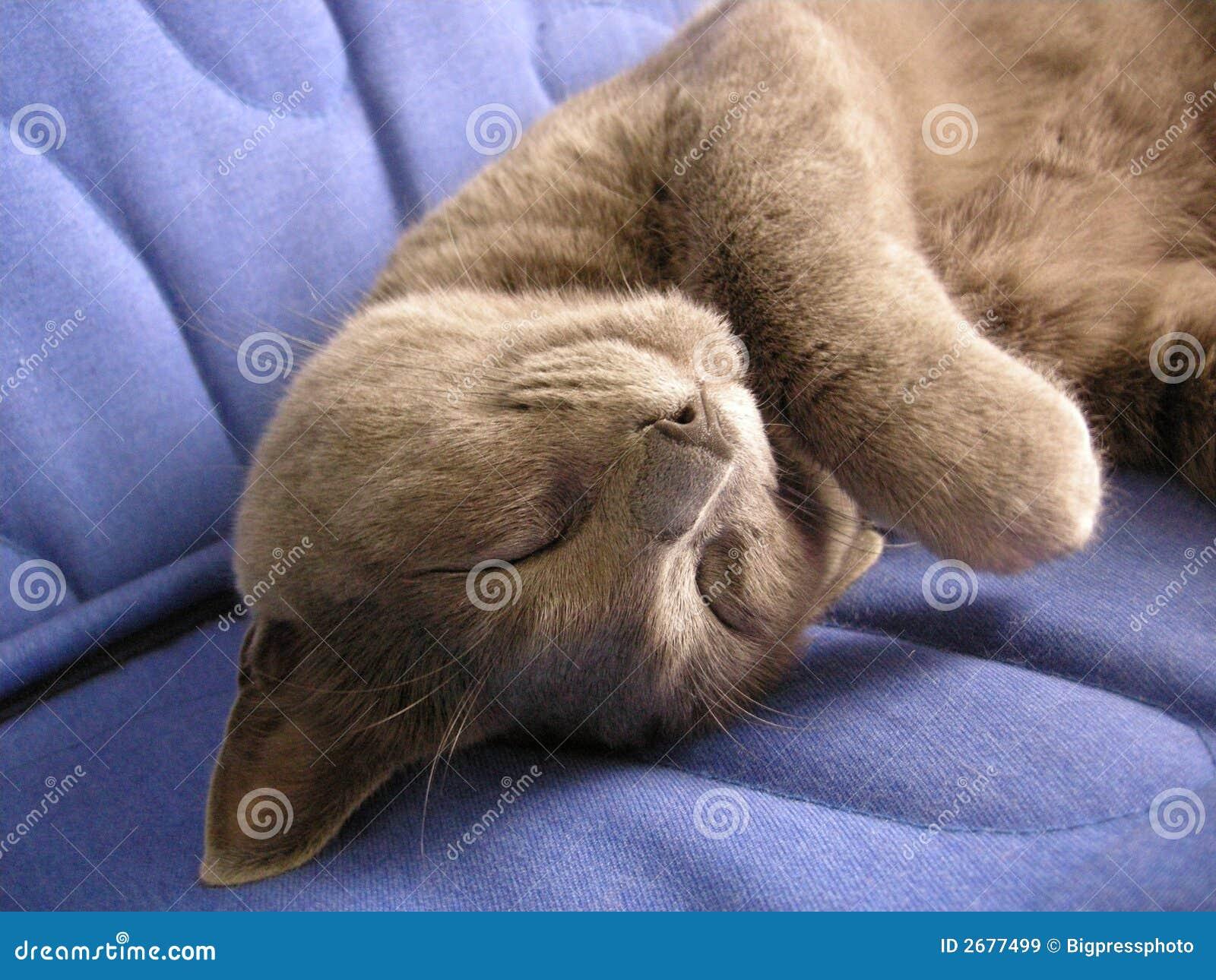 Amazing cat sleep