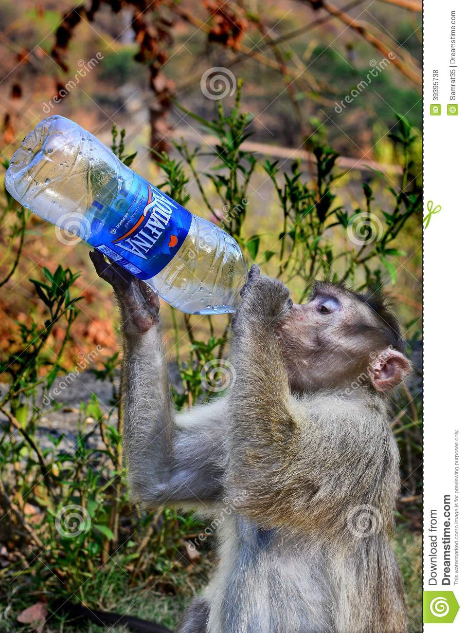 Amazing Drink Editorial Stock Photo Image Of Greedy 39395738