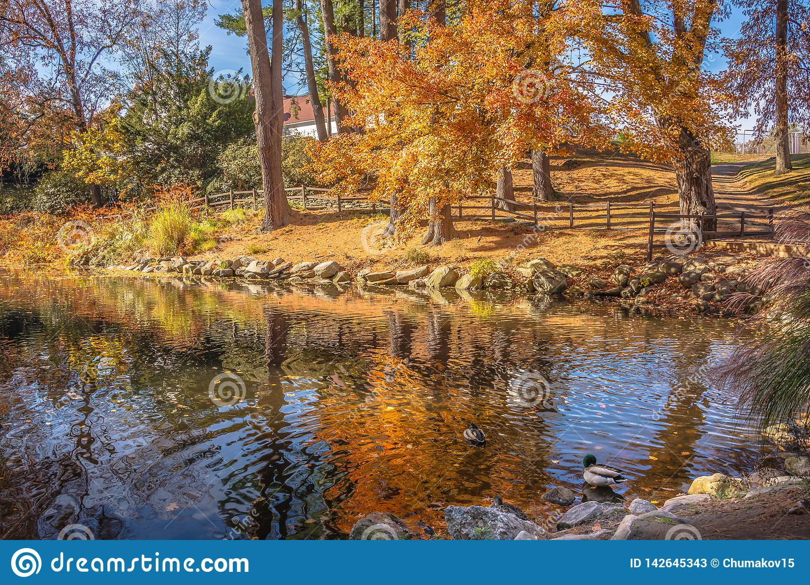 Autumn Nature Scene With Beautiful Lake Stock Image Image Of
