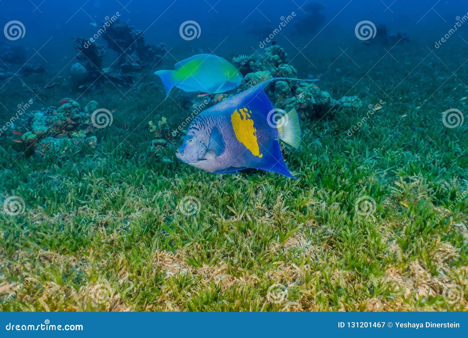 Amazing Fish swim in the Red Sea
