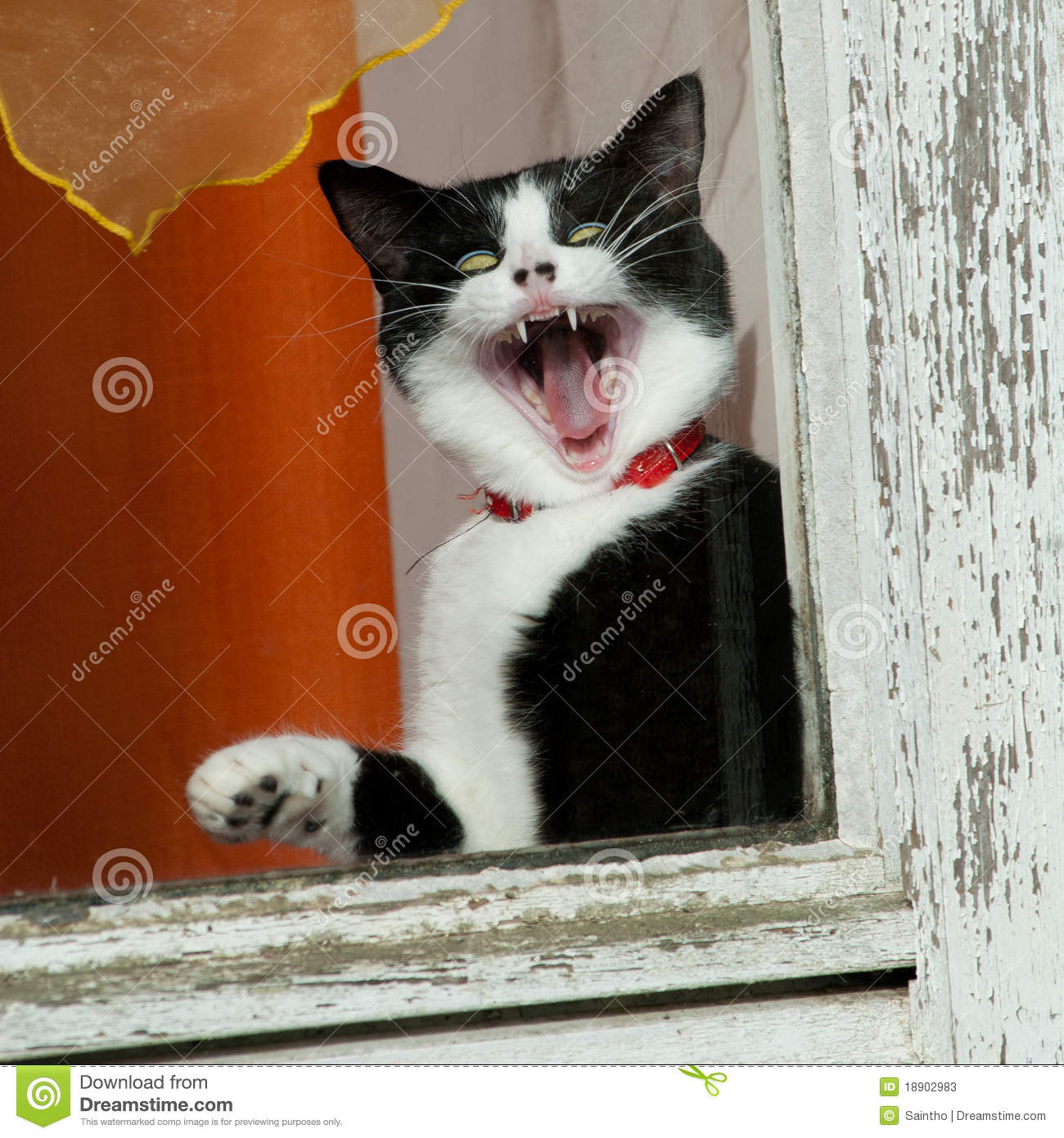Amazing Cat: Amazing Funny Cat Stock Image. Image Of Fear, Special