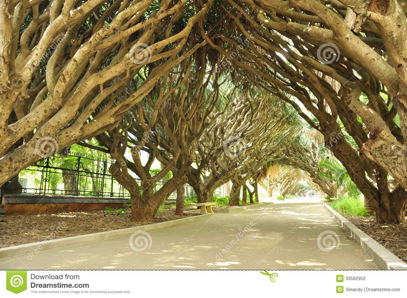 Amazing Garden In Alger Stock Photo Image Of Flora Close 33582952