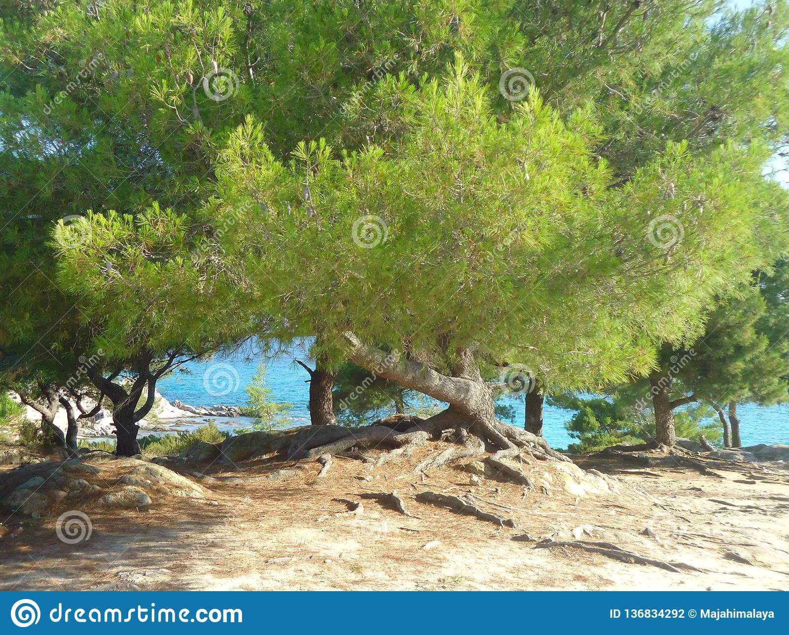 Amazing green trees by the blue sea in Greece