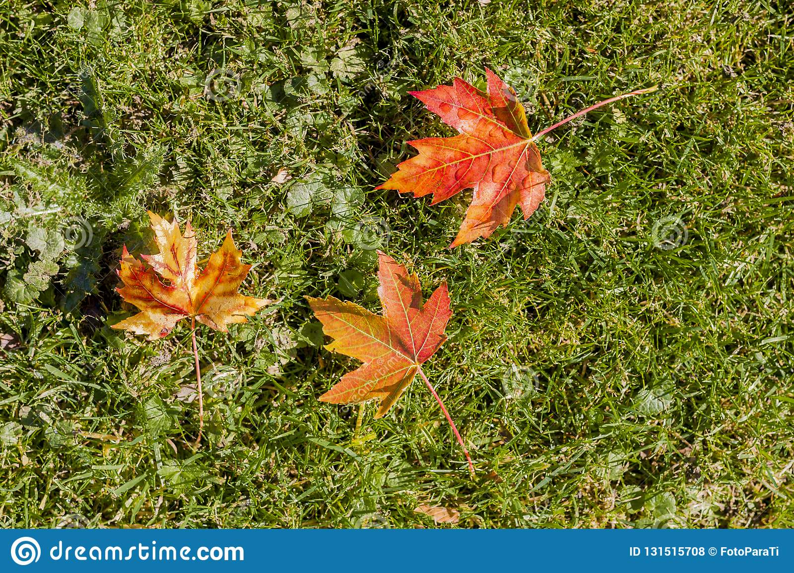 Amazing image of autumn leaves of red, yellow and brown colors on the grass