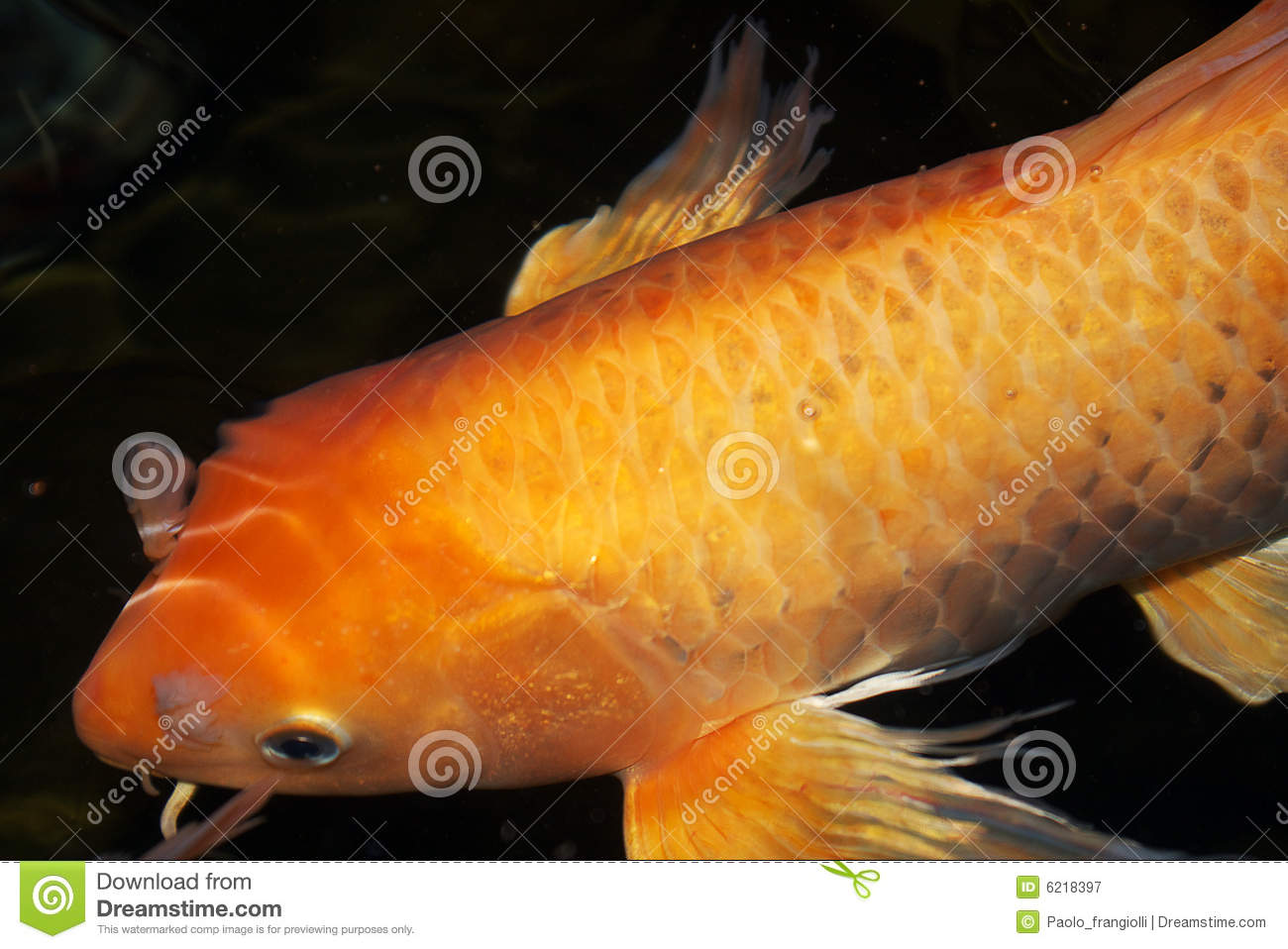 Pin royalty free carp fish logo clip art patrimonio on for Amazing koi fish