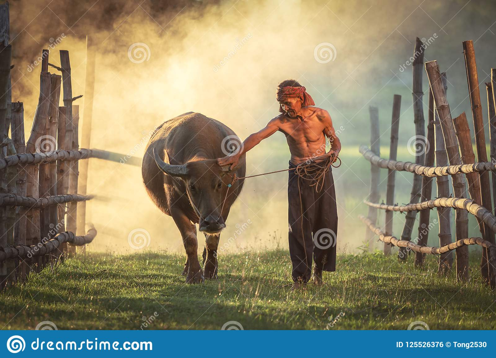 Amazing Love is love of peasants loyal to Buffalo, Thailand.