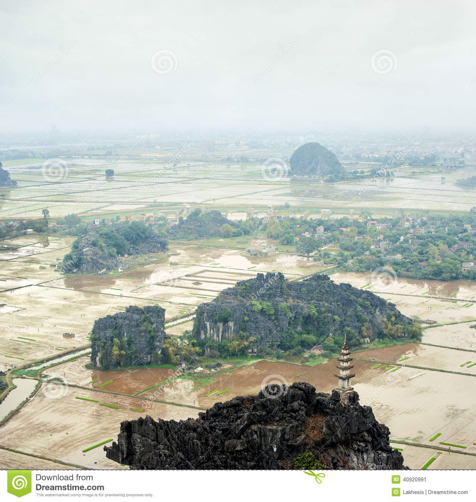 Amazing panorama view of the rice fields, Ninh Binh, Vietnam