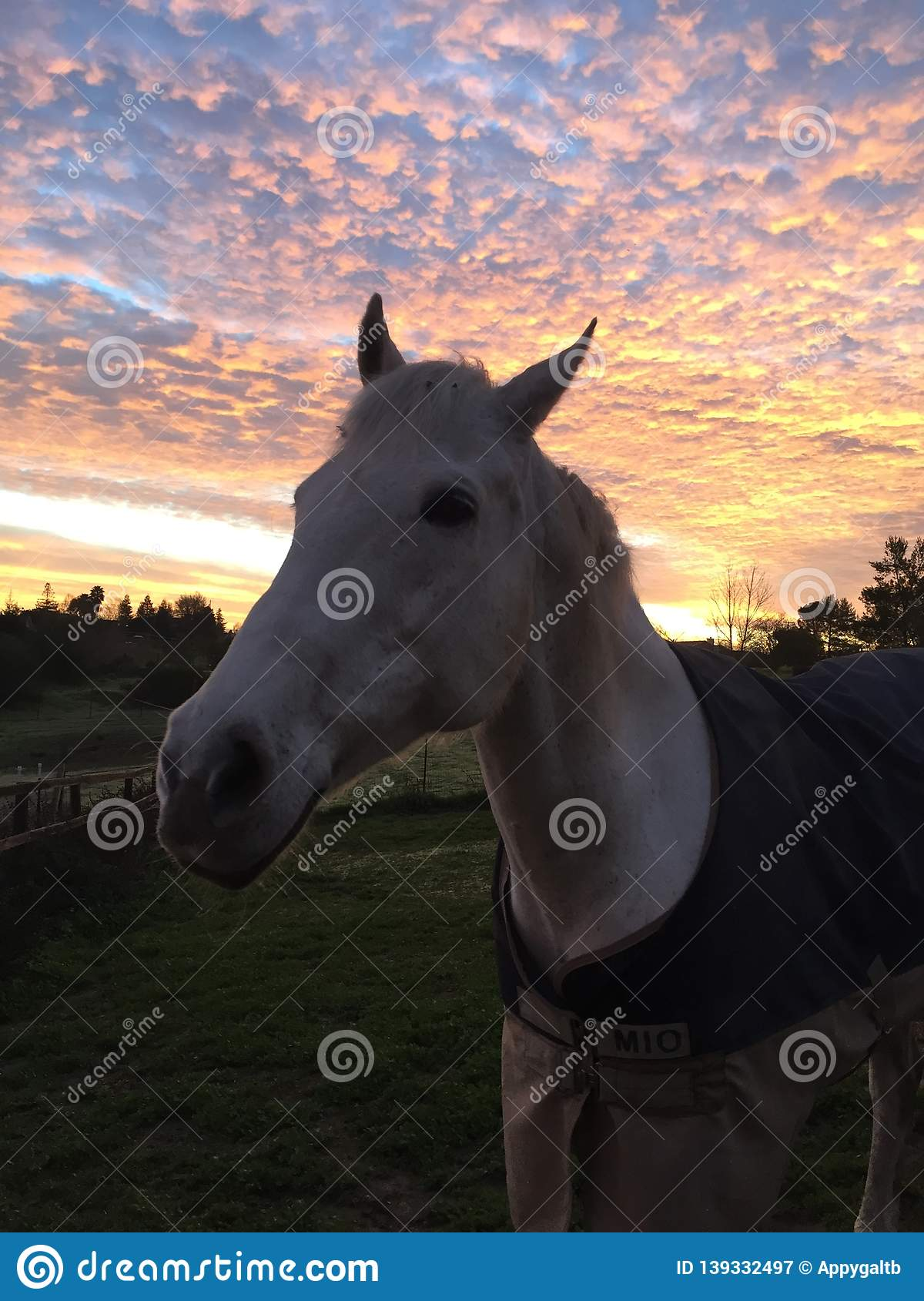 Amazing pink sky Sunrise with horse wearing a blanket