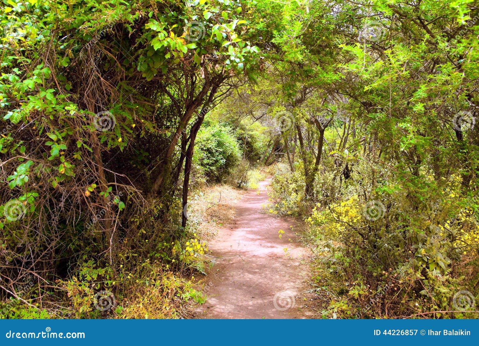 The amazing rain-forest in La Gomera