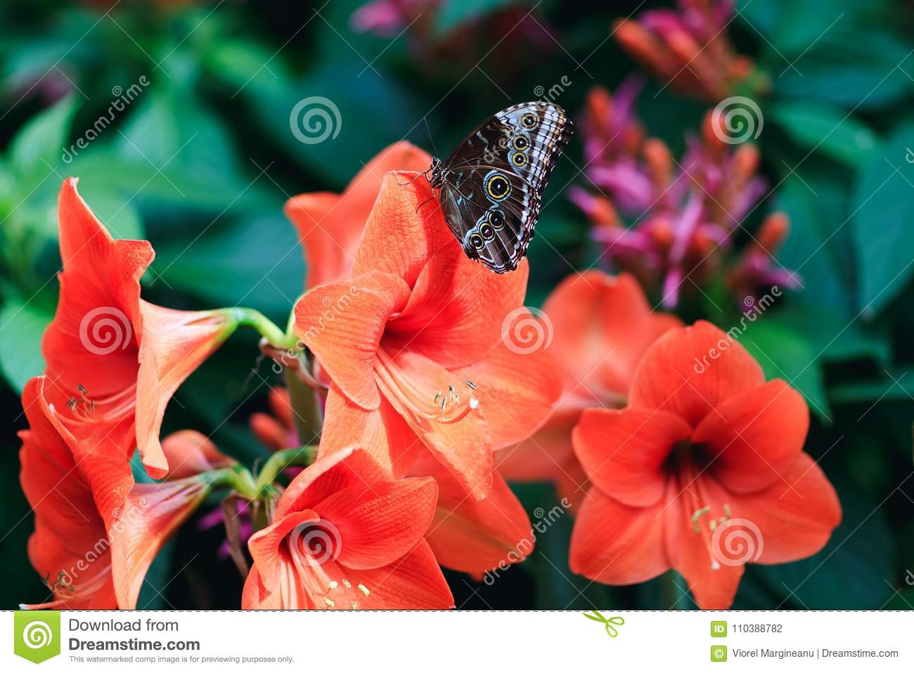 Amazing red lily with cute lime butterfly in spring garden.