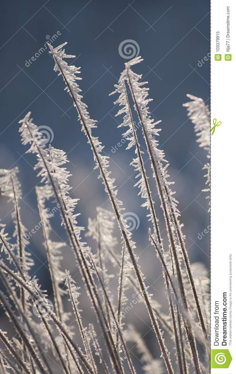 Amazing rime and frost crystals on grass in sunlight