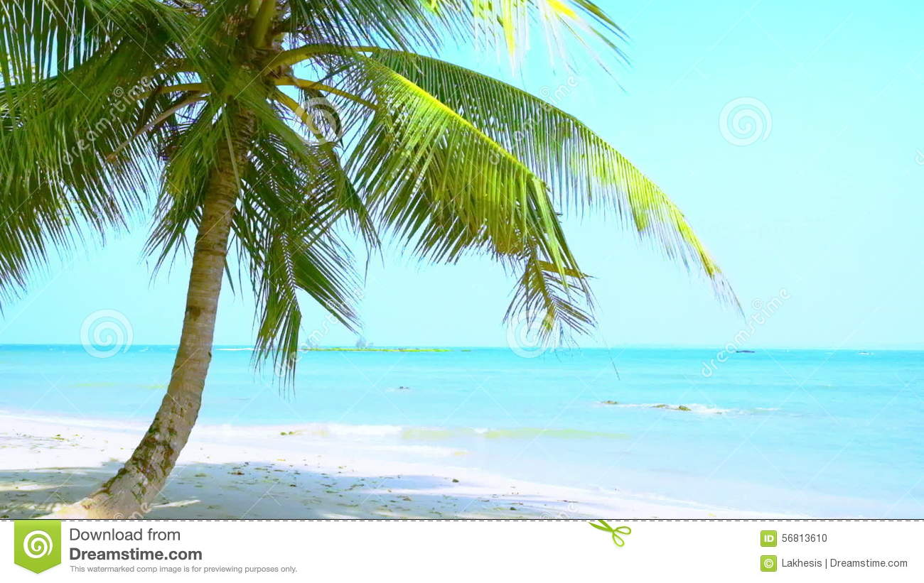 Amazing Tropical Beach Landscape With Palm Tree White Sand And Turquoise Ocean Waves Myanmar Stock Footage
