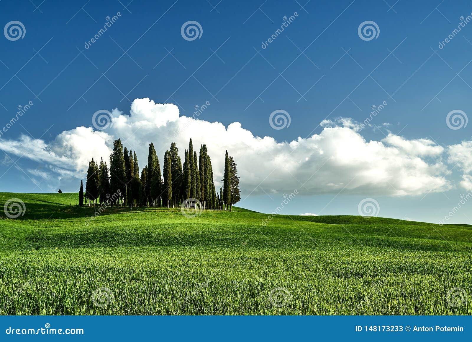 Amazing Tuscany landscape. Green grass, blue sky, cypress trees