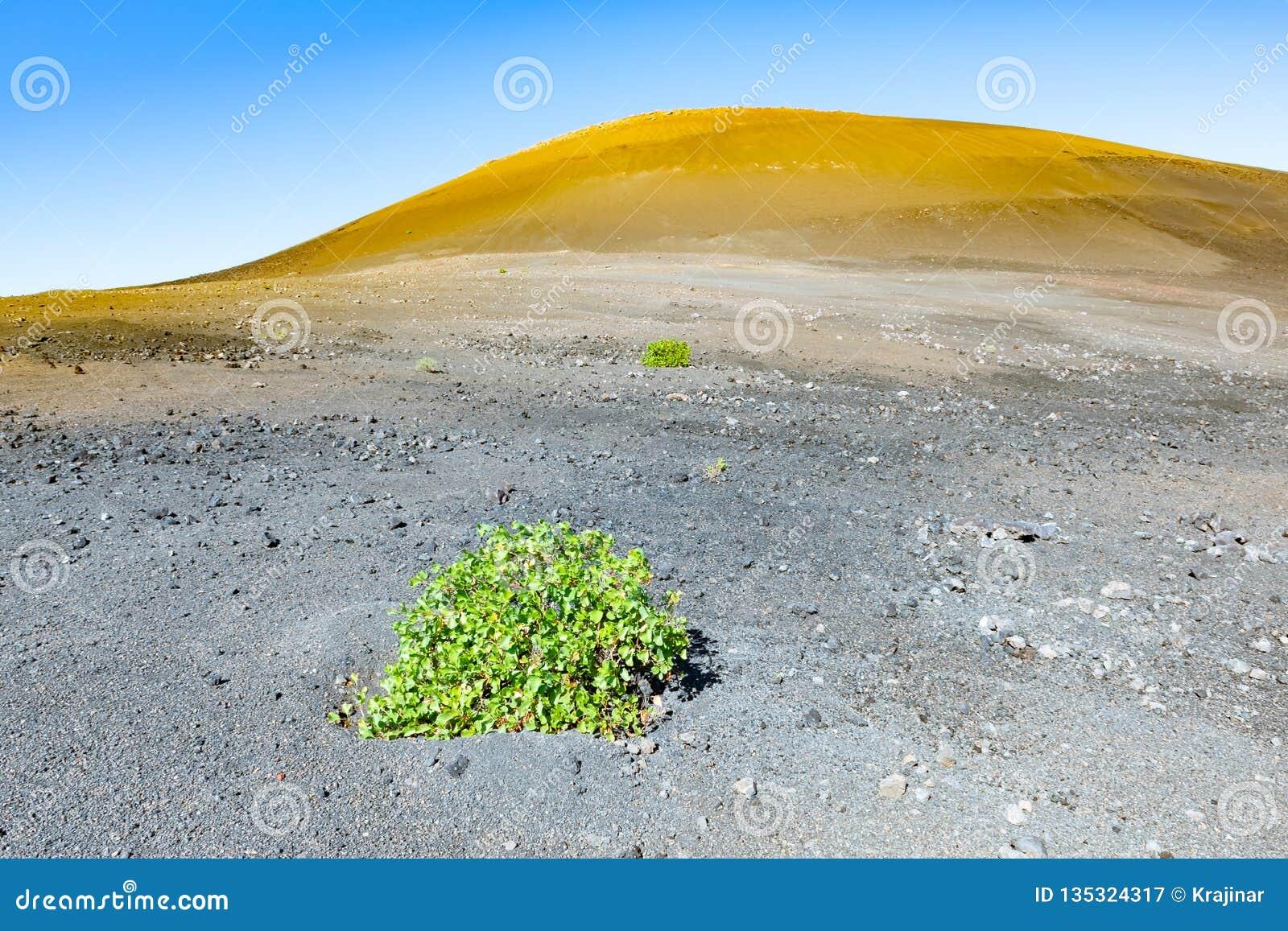 Amazing Vulcanic Landscape Of The Caldera De Los Cuervos