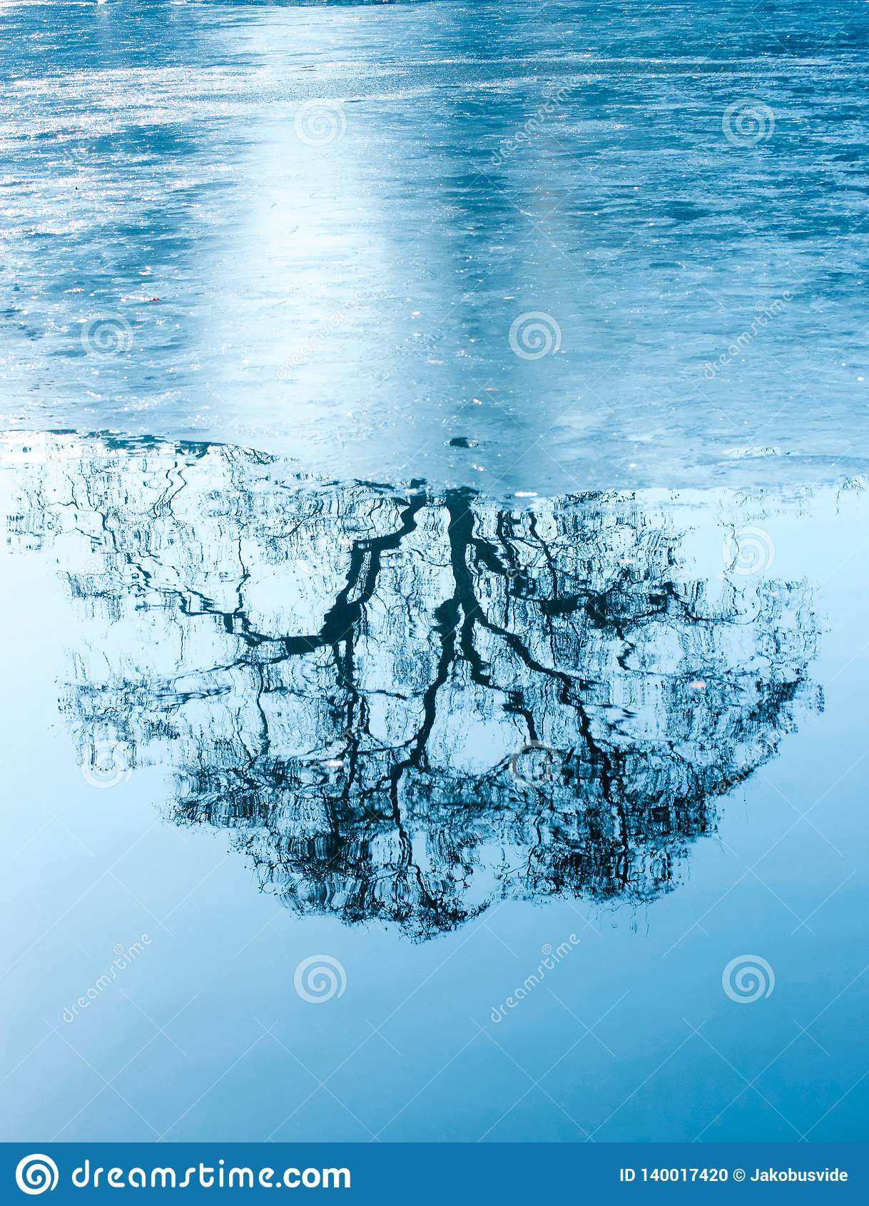 Amazing winter reflections of a tree on a frozen lake