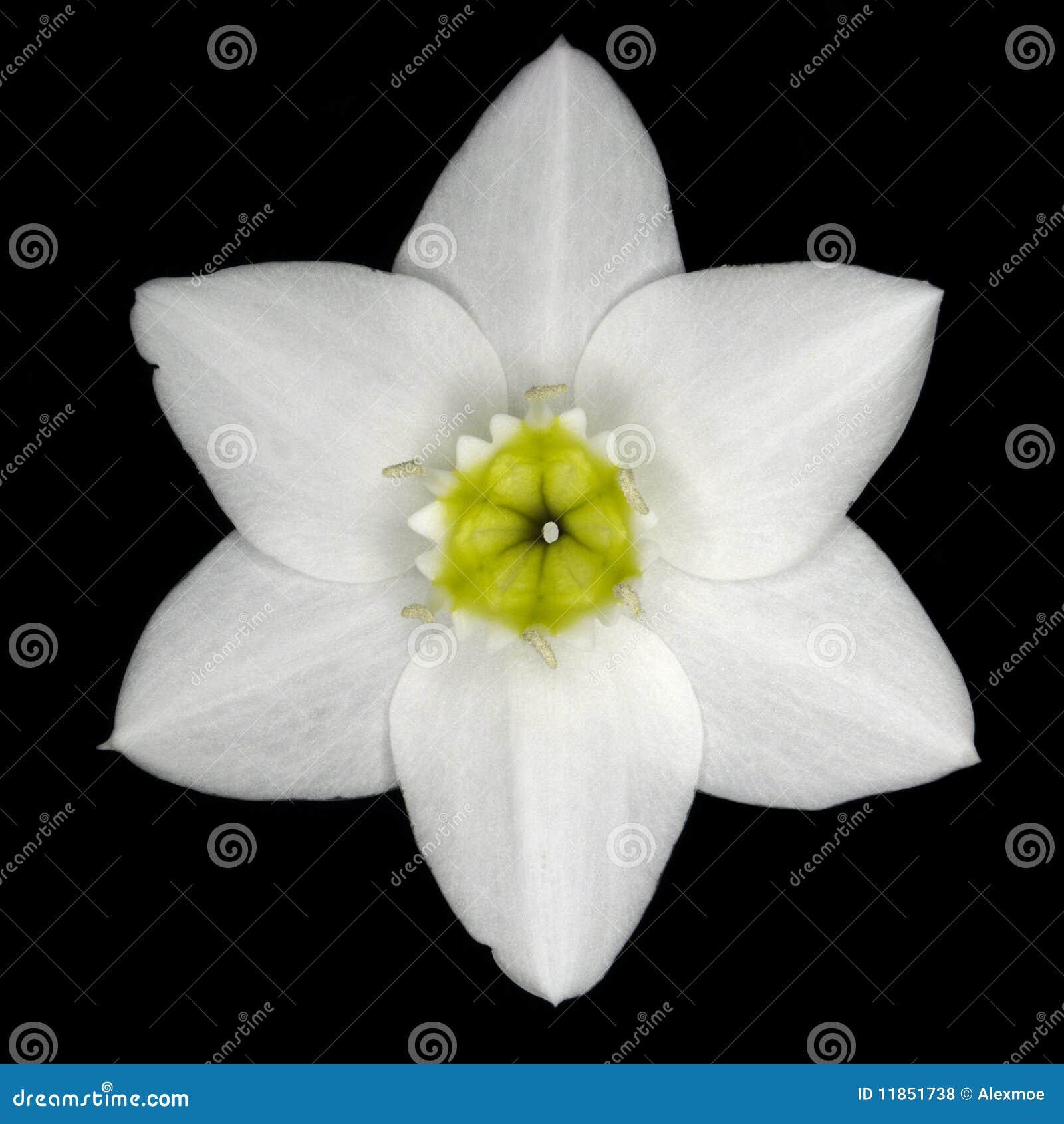 Amazon kwiatu leluja