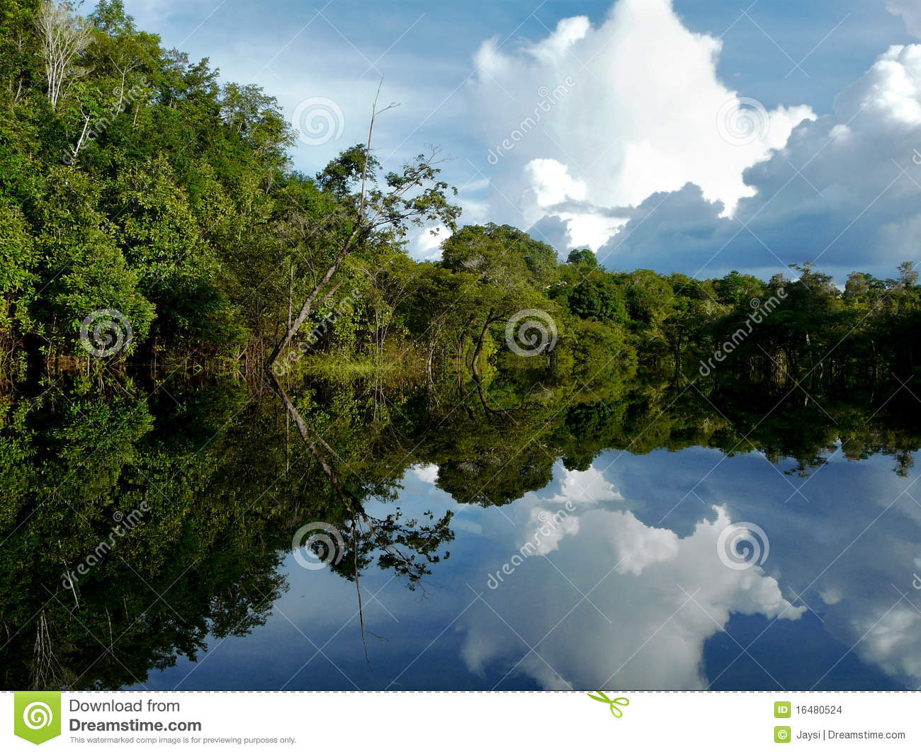 amazon river and brazil The amazon river is located in south america it runs through guyana, ecuador, venezuela, bolivia, brazil, colombia and peru the length of the amazon river is approximately 6400 kilometres (4000 miles).