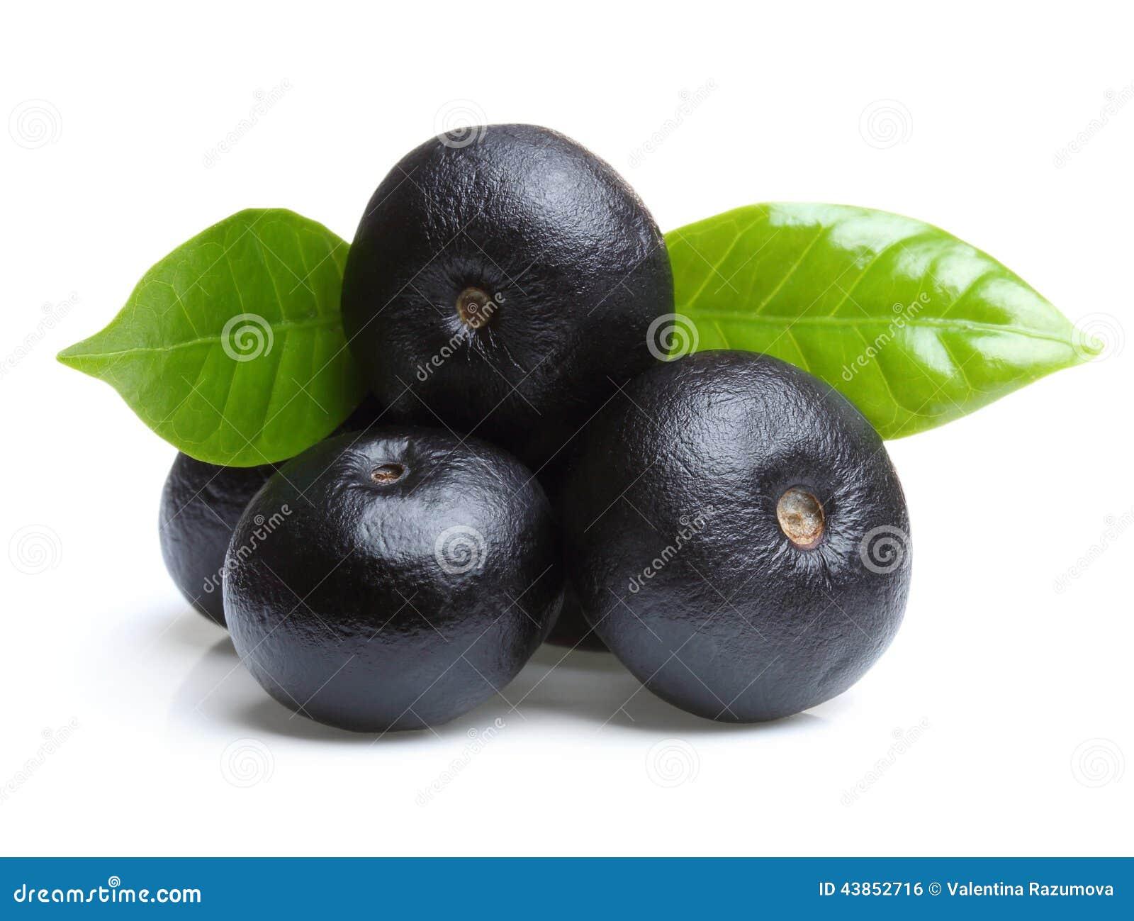 Amazonki acai owoc z liściem