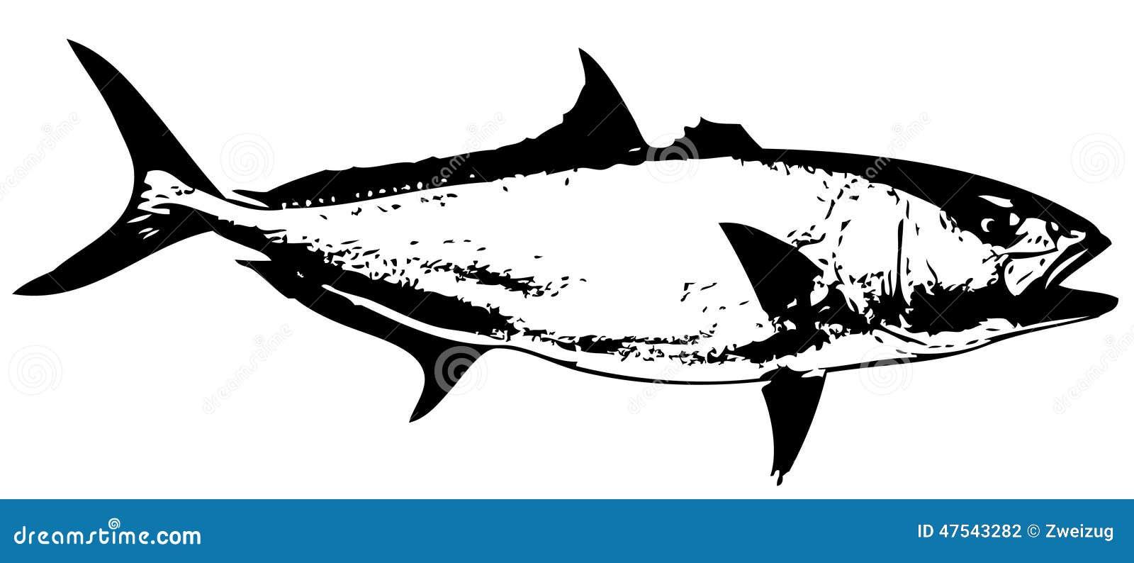 Amberjack Fish Vector Stock Vector Image 47543282