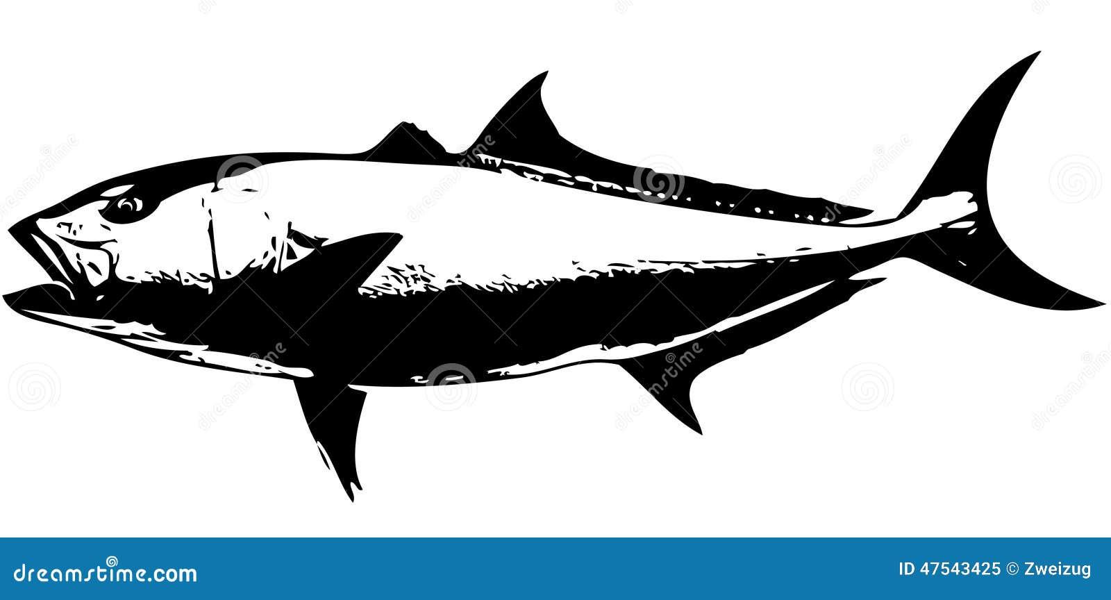 Red drum fish clip art saltwater stock illustrations vectors