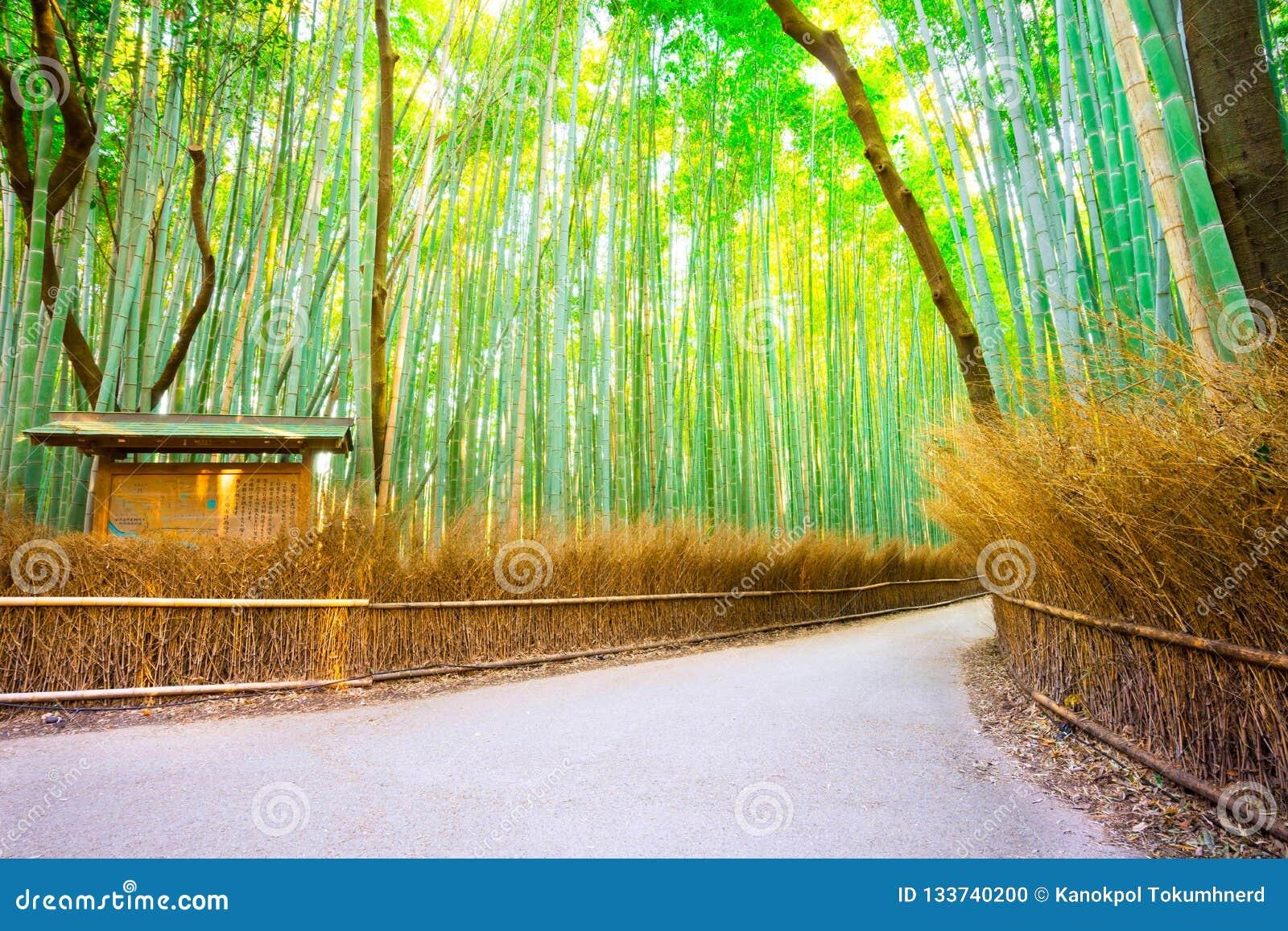 Amboobosjes in Arashiyama in Kyoto, Japan