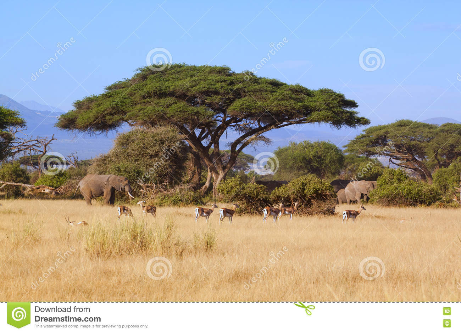 Amboseli сафари