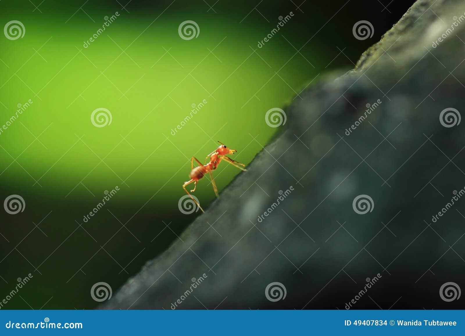 Download Ameisen stockfoto. Bild von landschaft, tiere, hitze - 49407834