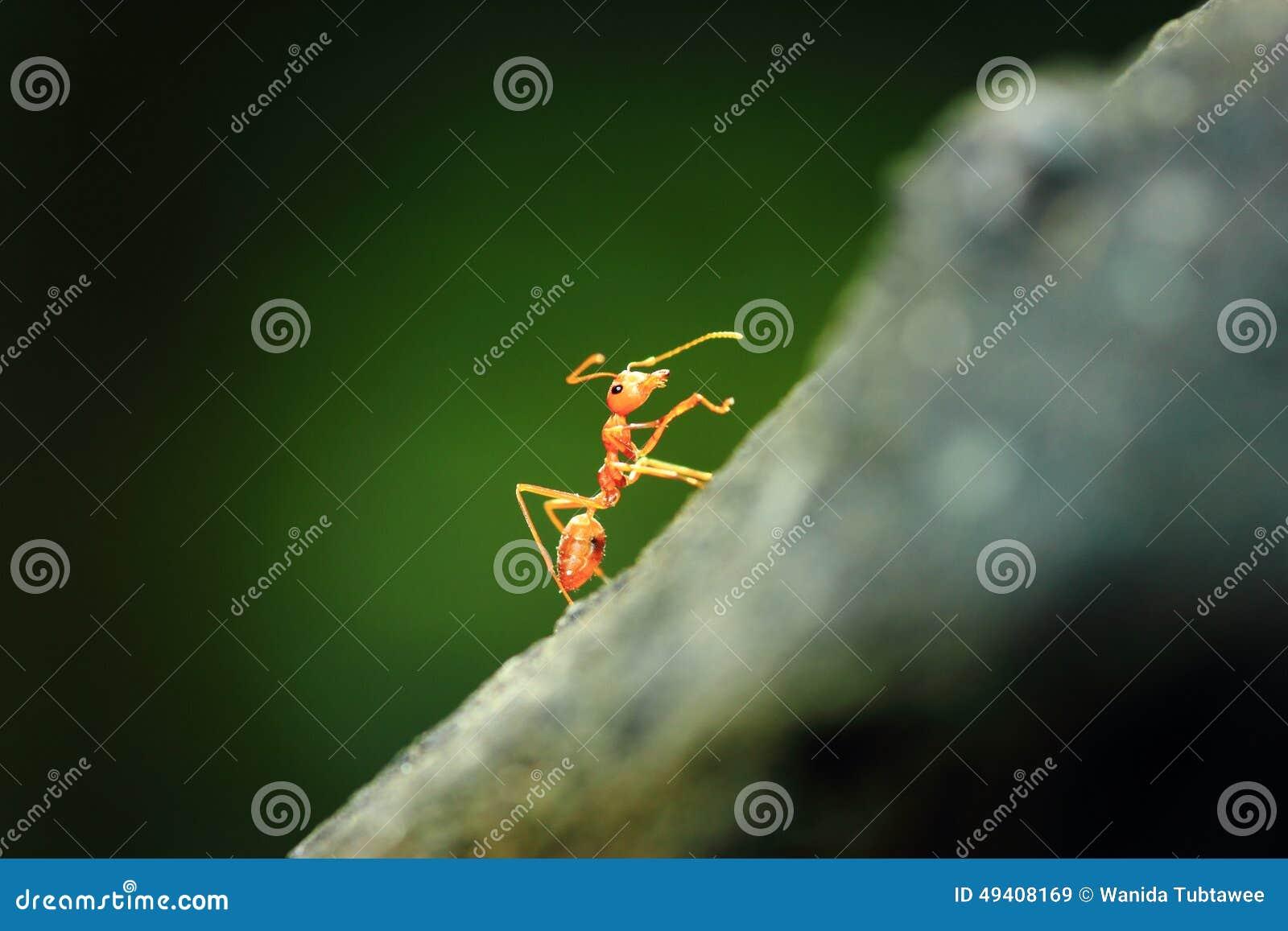 Download Ameisen stockbild. Bild von gleiskettenfahrzeuge, heuschrecken - 49408169