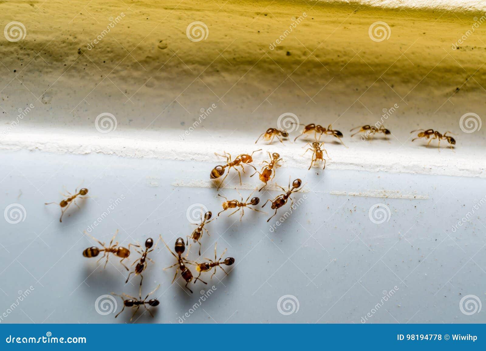 Ameisen in buntem