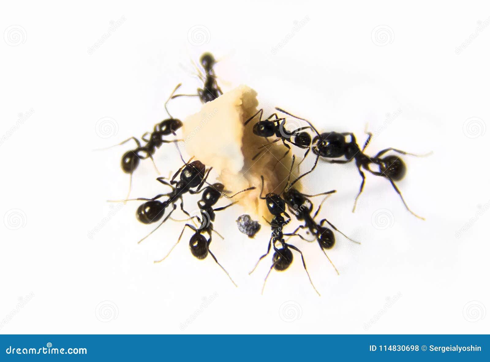 Gemütlich Kleine Schwarze Ameisen In Küche Und Bad Bilder - Küche ...
