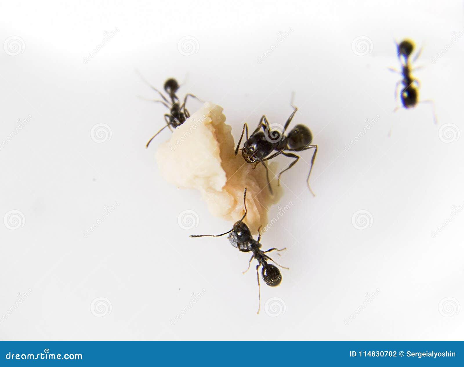Berühmt Ameisen In Der Küche Bilder - Ideen Für Die Küche Dekoration ...