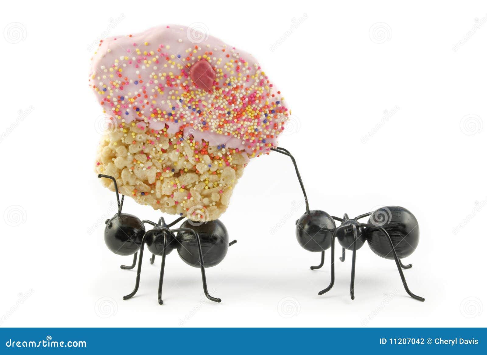 emejing hausmittel gegen ameisen in der küche images - house