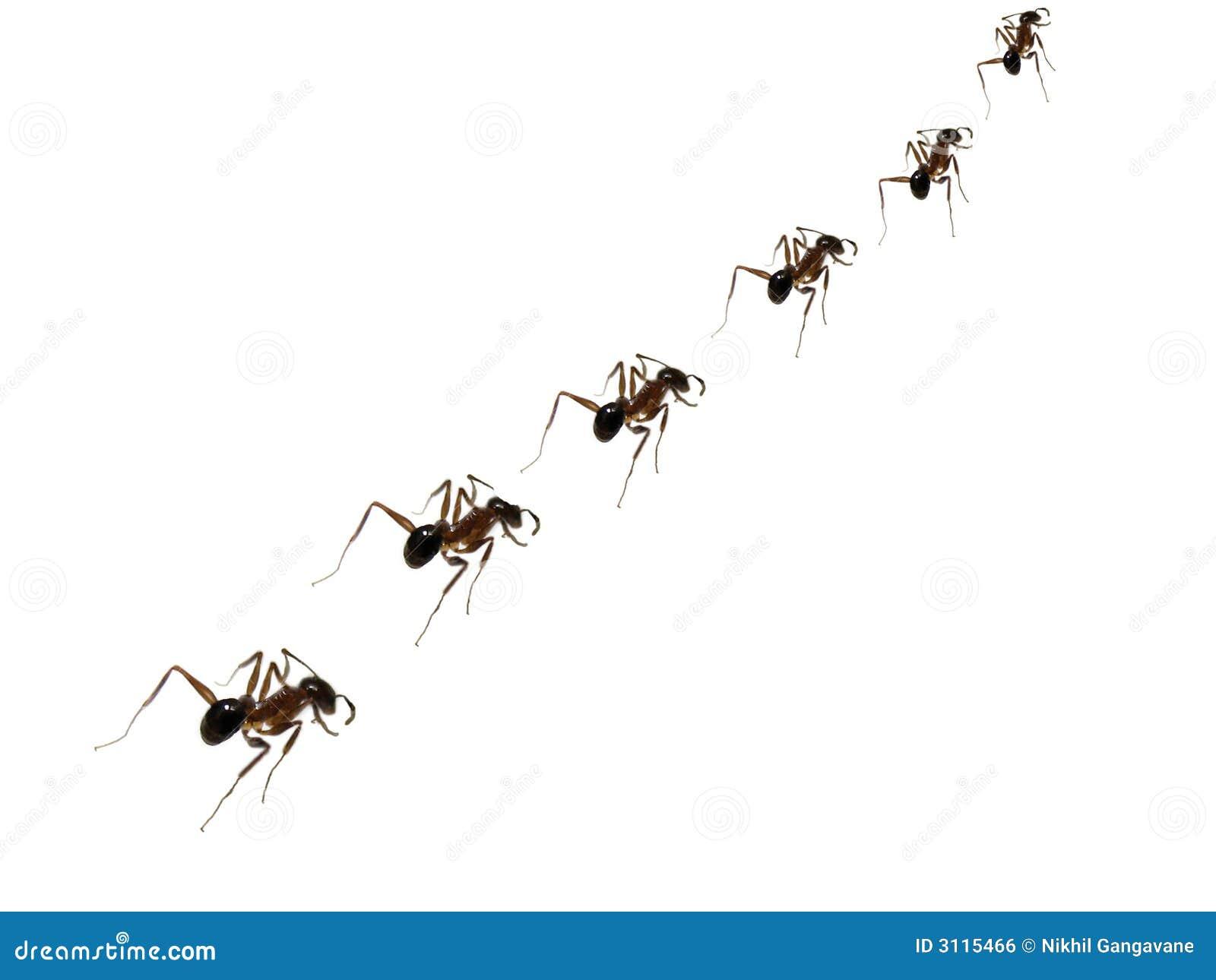 Ameisen-Disziplin