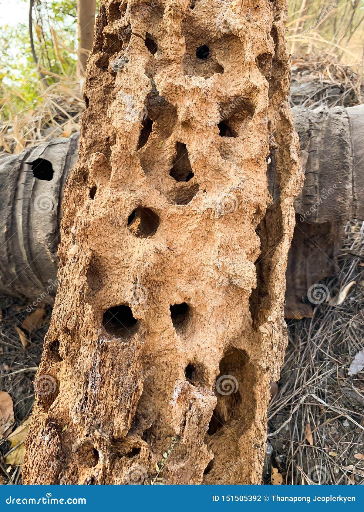 Ameisenhügelhintergrund