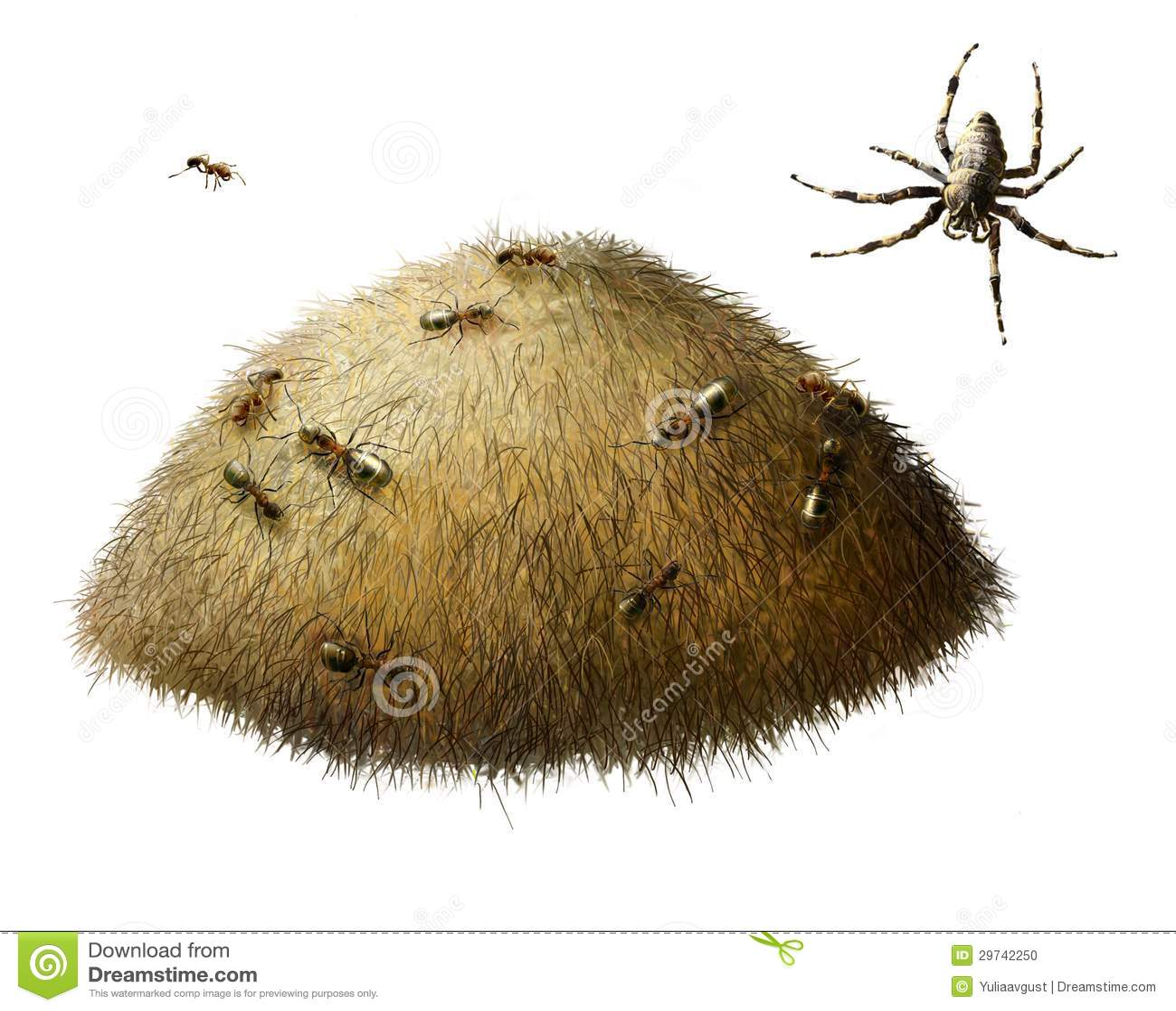 ameisenhaufen mit ameisen spinne stockfoto bild 29742250. Black Bedroom Furniture Sets. Home Design Ideas